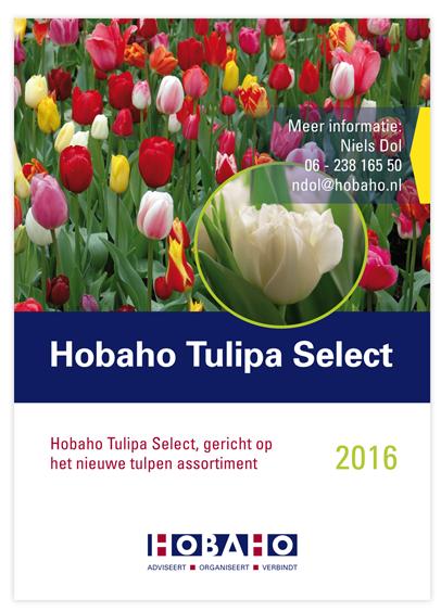 posterTulipaSelect