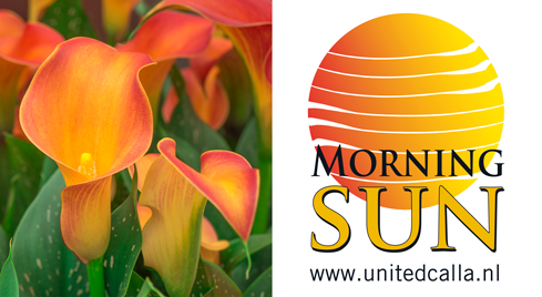 logo-Morning-Sun
