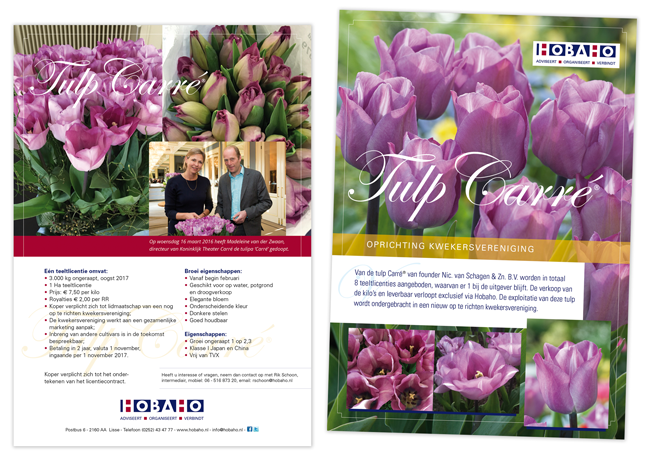 flyer.hobaho.tulp.Carre