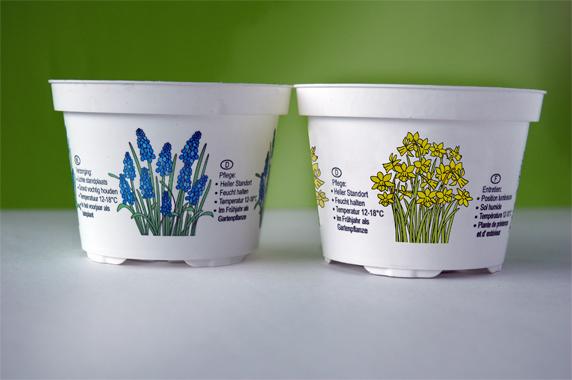 ill.pot.Narcis-1a