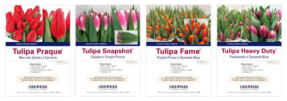 4-flyers-Tulipa